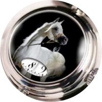 Angular Momentum Arabian Horses